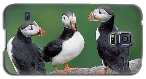 Atlantic Puffin Breeding Colony Canada Galaxy S5 Case by