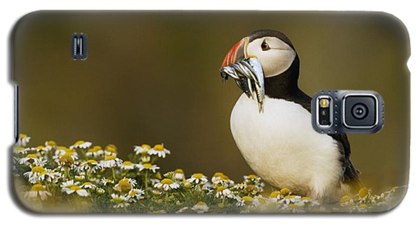 Atlantic Puffin Carrying Fish Skomer Galaxy S5 Case