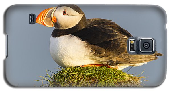Atlantic Puffin Iceland Galaxy S5 Case