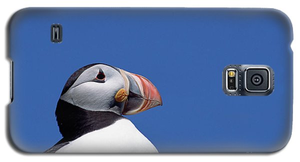 Atlantic Puffin In Breeding Colors Galaxy S5 Case by