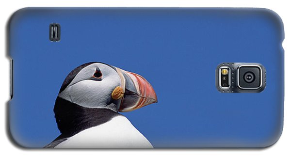 Atlantic Puffin In Breeding Colors Galaxy S5 Case by Yva Momatiuk and John Eastcott