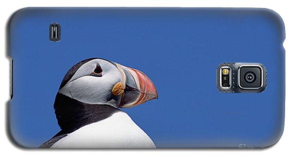 Atlantic Puffin In Breeding Colors Galaxy S5 Case