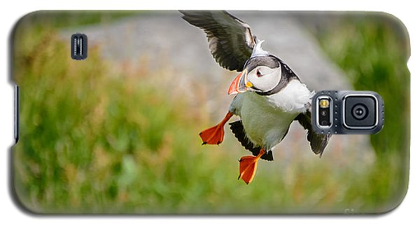 Atlantic Puffin, Incoming.... Galaxy S5 Case