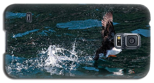 Atlantic Puffin Taking Off Galaxy S5 Case