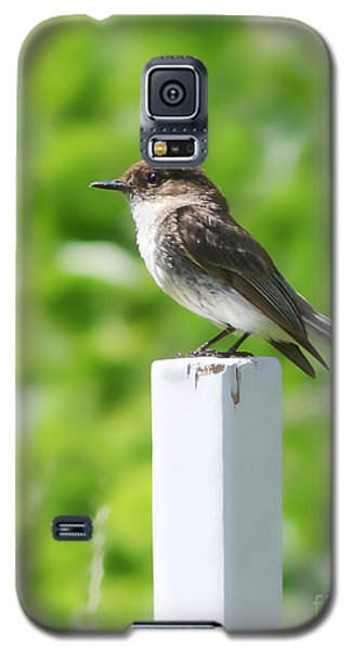 Galaxy S5 Case featuring the photograph Attentive Phoebe by Anita Oakley