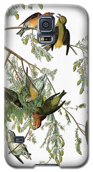 Audubon Crossbill Galaxy S5 Case
