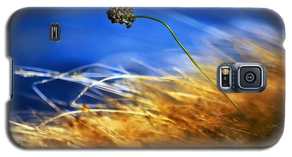 August Rush Galaxy S5 Case
