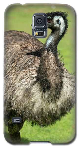 Emu Galaxy S5 Case - Australia, South Australia, Adelaide by Cindy Miller Hopkins
