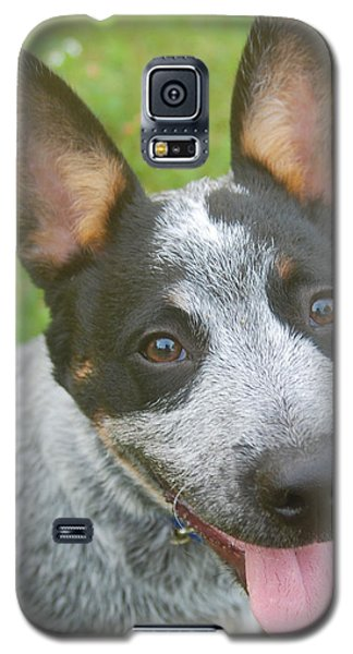 Australian Cattle Dog Galaxy S5 Case