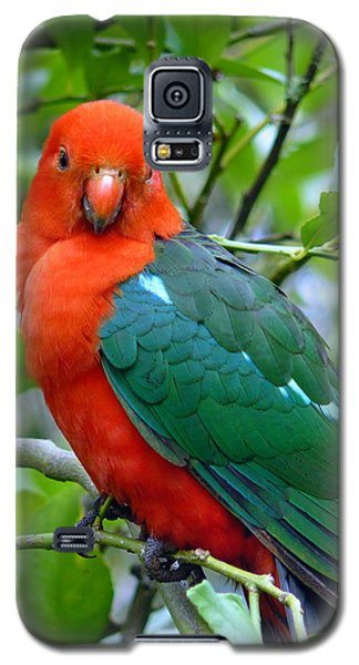 Galaxy S5 Case featuring the photograph Australian King Parrot Portrait by Margaret Stockdale