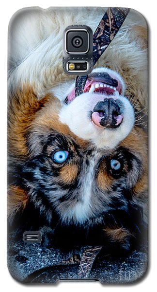 Australian Shepherd Galaxy S5 Case