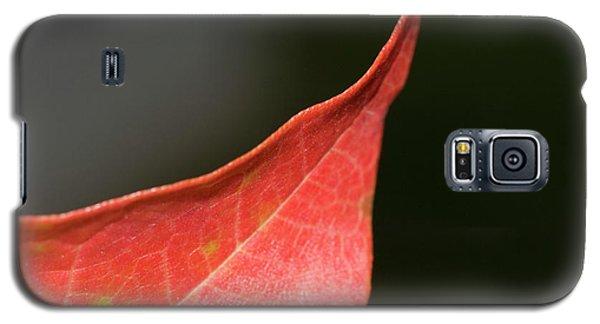 Galaxy S5 Case featuring the photograph Autumn 2 by Tara Lynn