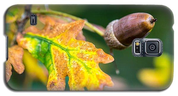 Autumn Acorn. Galaxy S5 Case