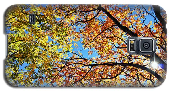 Autumn Afternoon Galaxy S5 Case
