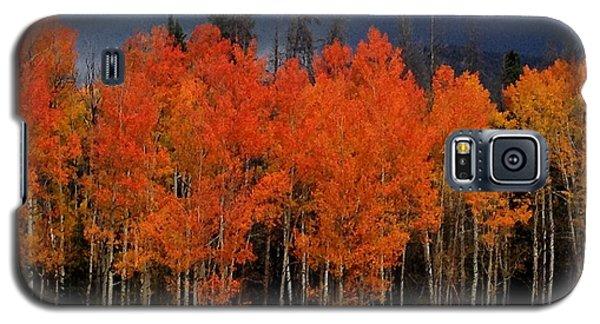 Autumn Aspen Galaxy S5 Case by Brenda Pressnall
