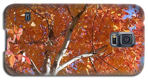 Autumn Aspen Galaxy S5 Case