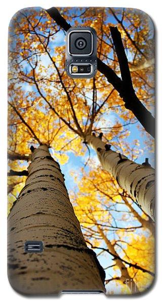 Autumn Aspens Galaxy S5 Case