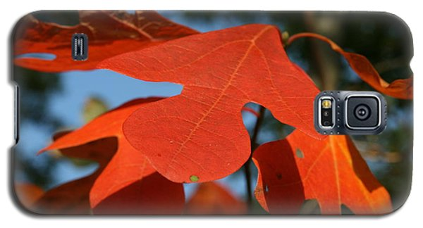 Galaxy S5 Case featuring the photograph Autumn Attention by Neal Eslinger