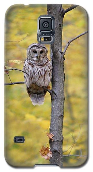 Autumn Barred Owl Galaxy S5 Case