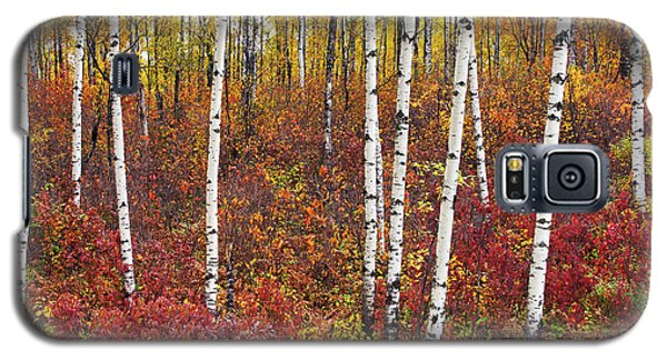Autumn Birches Galaxy S5 Case