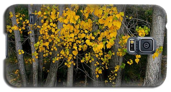 Autumn Breakout Galaxy S5 Case