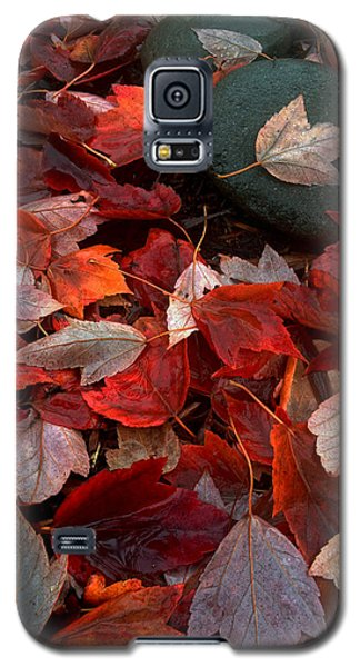 Galaxy S5 Case featuring the photograph Autumn Broadcast by Gwyn Newcombe