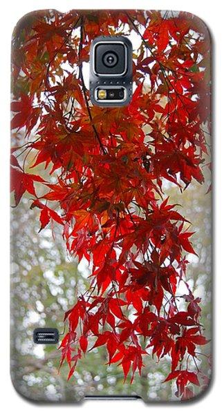 Autumn Curtain  Galaxy S5 Case by Yumi Johnson