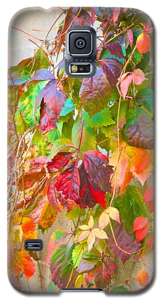 Autumn Colors Of Virginia Creeper Galaxy S5 Case
