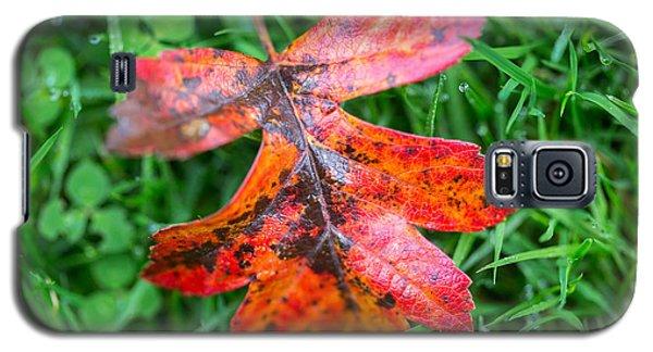 Autumn Colours. Galaxy S5 Case
