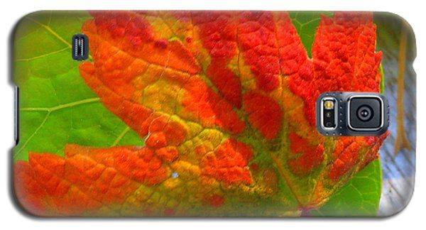 Autumn Delight Galaxy S5 Case by Karen Horn