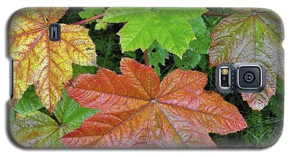 Autumn Devil's Club Galaxy S5 Case by Cathy Mahnke