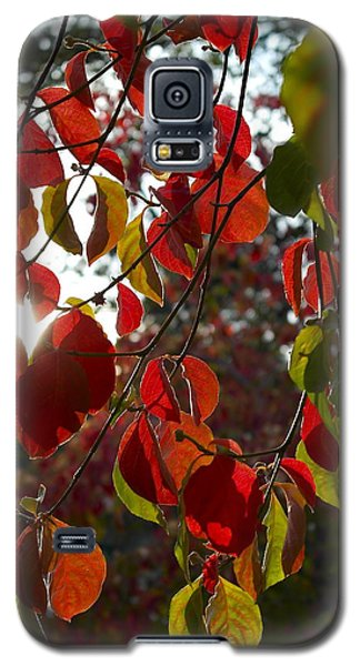 Autumn Dogwood In Evening Light Galaxy S5 Case