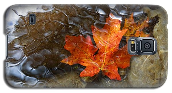Autumn Down Under Galaxy S5 Case