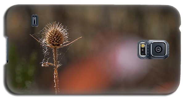Galaxy S5 Case featuring the photograph Autumn Dry Teasel by Jivko Nakev