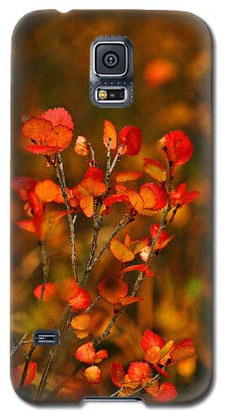 Autumn Emblem Galaxy S5 Case