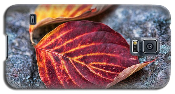 Autumn Family Tree Galaxy S5 Case