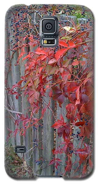 Autumn Fence Galaxy S5 Case