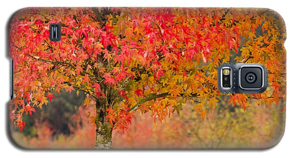 Autumn Fire Galaxy S5 Case by Sonya Lang