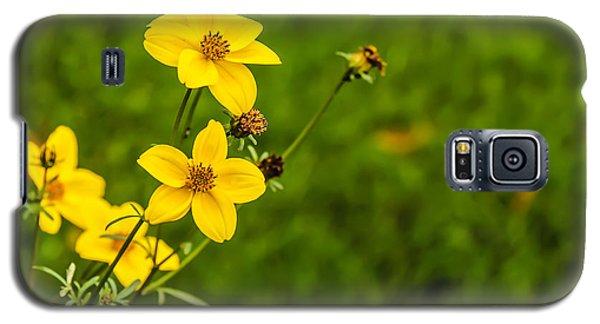 Autumn Flowers Galaxy S5 Case by David Warrington