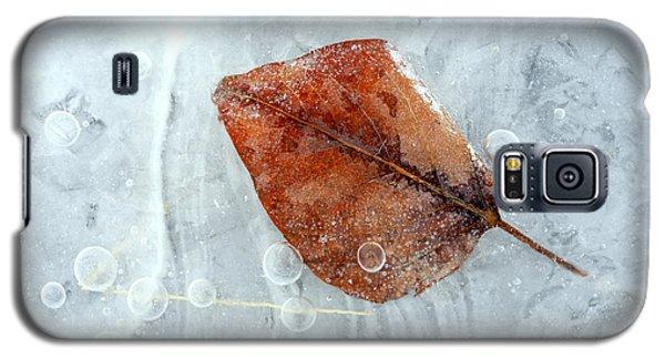 Ice Galaxy S5 Case - Autumn Frozen by Mike  Dawson