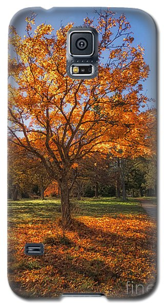 Autumn Glow Galaxy S5 Case