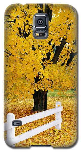 Autumn Gold Galaxy S5 Case by Alan L Graham
