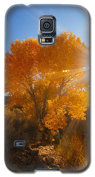 Autumn Golden Birch Tree In The Sun Fine Art Photograph Print Galaxy S5 Case