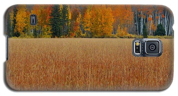 Autumn Golden Fields And Aspens Grand Teton National Park Galaxy S5 Case