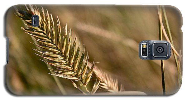 Autumn Grasses Galaxy S5 Case by Linda Bianic