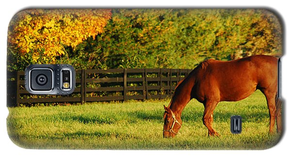 Galaxy S5 Case featuring the photograph Autumn Grazing by James Kirkikis
