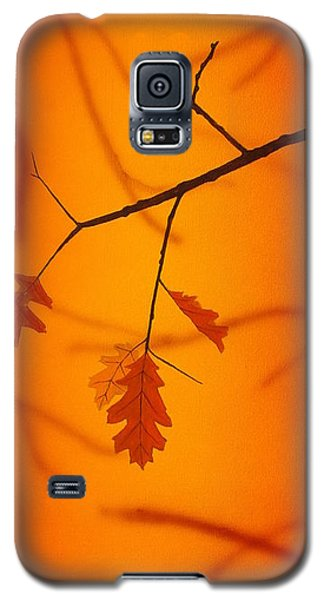 Autumn Galaxy S5 Case