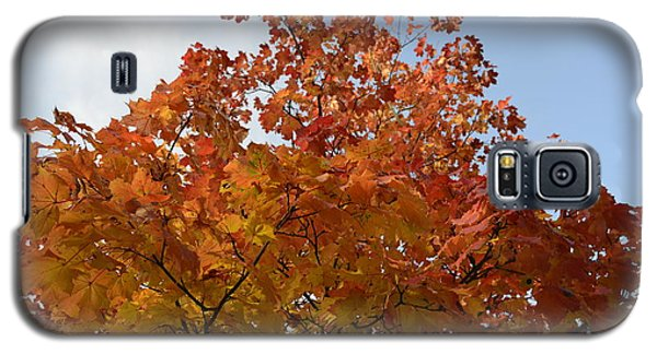 Autumn Harmony 1 Galaxy S5 Case