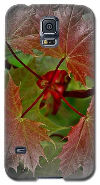 Autumn Galaxy S5 Case by Henry Kowalski