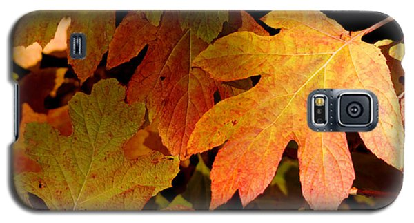 Autumn Hues Galaxy S5 Case by Living Color Photography Lorraine Lynch